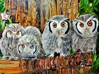 Four Snow Owls
