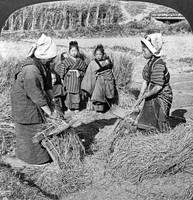 Peasant women heading rice with steel combs in the