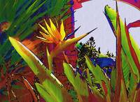 Bird of Paradise Near Malibu