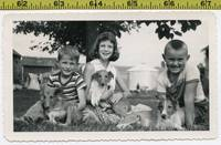 Vintage 1953 DOG photo   Adorable COLLIE Puppies &