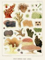 Great Barrier Reef Corals from The Great Barrier R