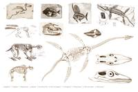 Different types of ancient fossils illustrated by