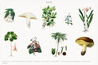 Different types of plants illustrated by Charles D