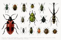 Different types of insects illustrated by Charles