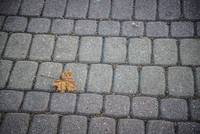 Yellow maple leaf on the cobblestone pavement