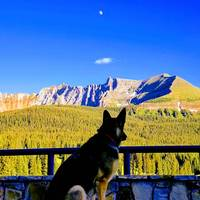 German Shepherd over the San Juans