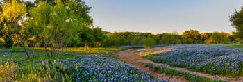 Golden Glow Over Bluebonnet Landscape Pano