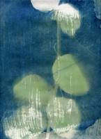 Leaves, watercolor on cyanotype