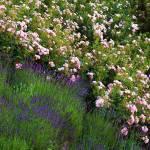 """Garden"" by BobBerwyn"