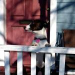 """Missie porch"" by ChancenMissie"