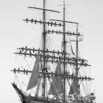 """Romanian tall Ship Mircea"" by Avanzini"