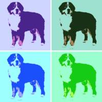 Bernese Mountain Dog Pop Art