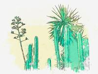 Desert Plants -  watercolor by Adam Asar