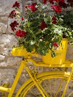 Yellow Bicycle and Red Flowers