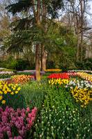 Colorful Floral Patches in Keukenhof