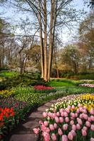 Pathway through Keukenhof Flowerbeds