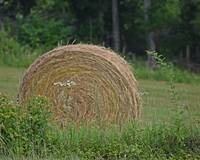 A Roll of Hay
