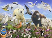 arctic birds and mammals
