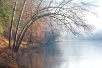 Bending Trees over the Clarion River No3