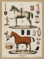 A chromolithograph of horses with antique horsebac