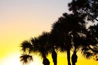 Palmetto and Pine Tree Sunrise, Port St. Lucie, FL