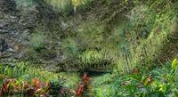 The Fern Grotto - Wailua River State Park