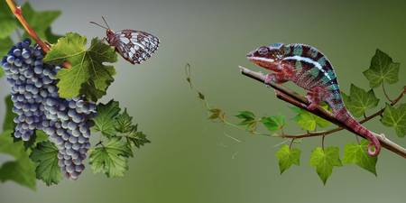 Intrigue. Butterfly and chameleon