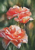 spice colored roses
