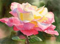 princess diana rose