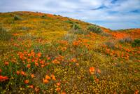 The Bold And The Beautiful - Superbloom 2019
