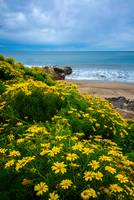 Spring Wildflowers At Leo Carrillo State Beach
