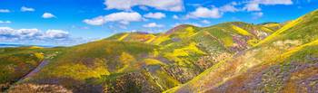 Carrizo Plain Superbloom Panorama 2017