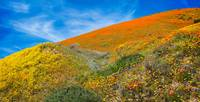 Changing Colors On The Hill - Superbloom 2019
