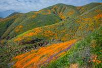 Colorful Corners Of The Walker Canyon Superbloom