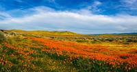 Evening Beauty At The Reserve Pano - Superbloom