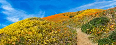 Happy Trails Panorama - Superbloom 2019