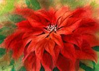 Warm Poinsettia Single Watercolor