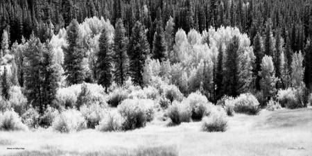 Lco027-2  Infared at Valley's Edge