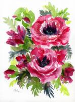 Rose Poppies