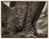 Old Tree Trunk in Monochrome