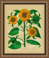 Sunflowers in frame