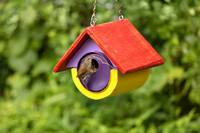 Animal - Bird - The house wren