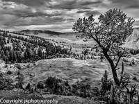 Mammoth Springs in B&W