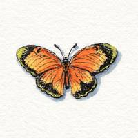 Watercolour Butterfly Study by Irina Sztukowski