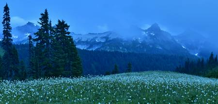 Dusk clouds cover Tatoosh Range and wildflowers