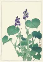 Purple Flowering Hosta by Ohara Koson