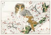Short-Eared Owl & Cherry Blossom by Numata Kashu