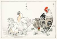 Domestic Fowl by Numata Kashu