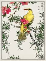 Bush Warbler and Drooping Peach by Numata Kashu