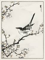 Bush-Warbler and White Plum Tree by Numata Kashu